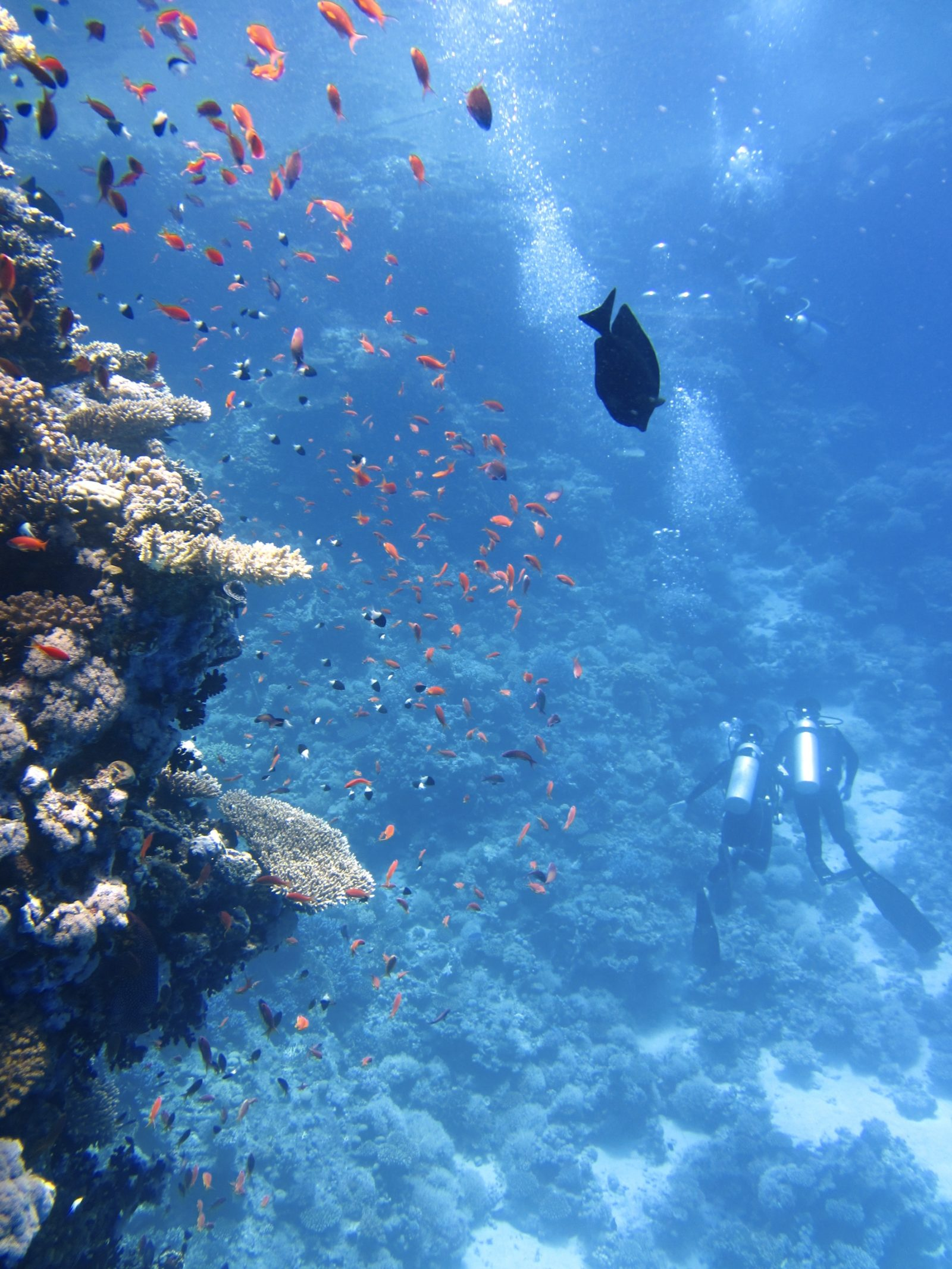 Underwater Fish, Corral and Divers